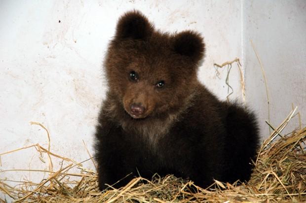 Sta molto bene l orsetto catturato in for Cucciolo di talpa