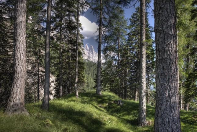 Presentato il progetto della prima casa sull albero del trentino - Casa sugli alberi ...